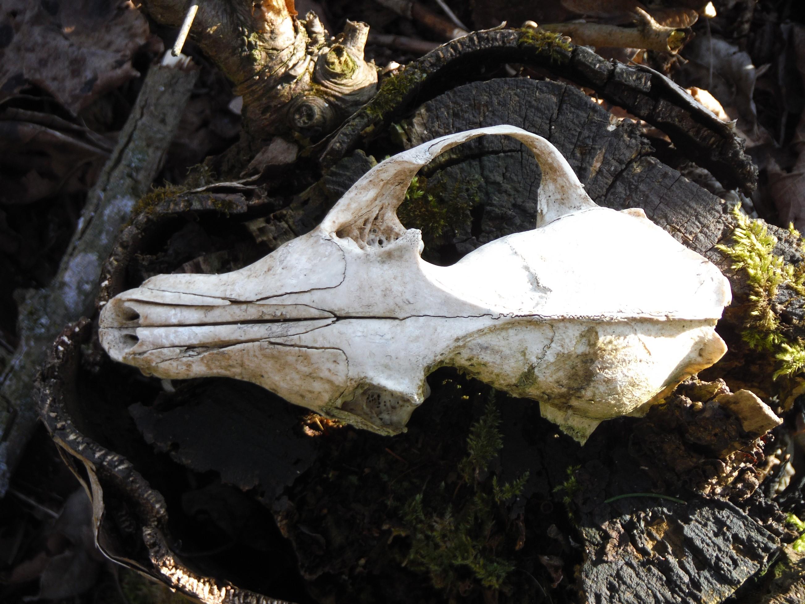 skelet.jpg